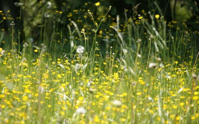Consejos para sobrellevar las alergias en primavera